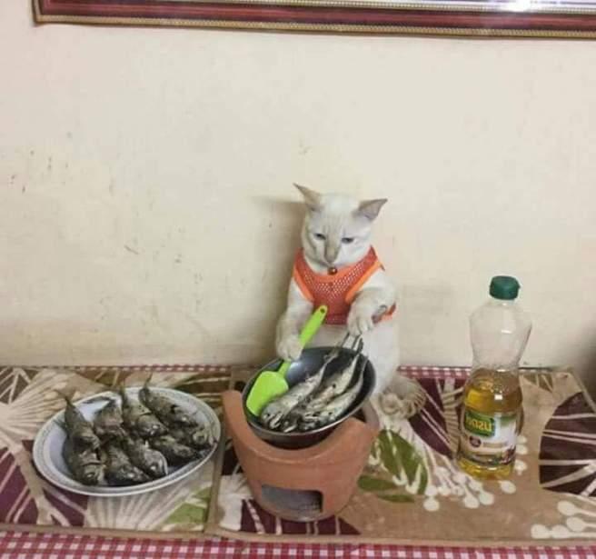 kucinggorengikan