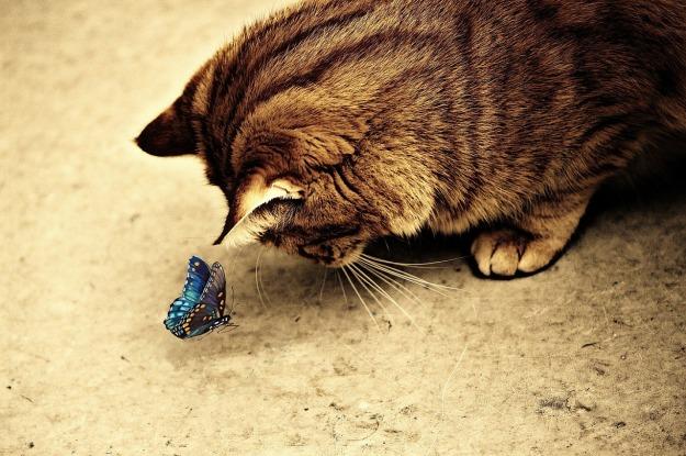 cat-1055630_1280